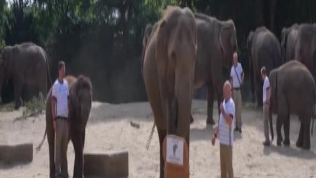 Euro 2020, l'elefante dello zoo di Amburgo fa piombare nel dramma l'Inghilterra